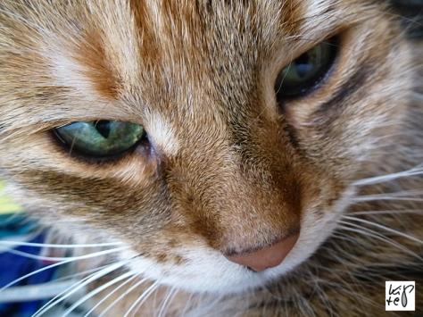tierarztphobie
